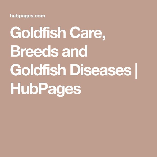 Goldfish Care, Breeds and Goldfish Diseases | HubPages