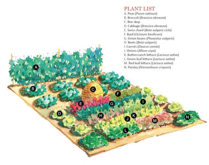 Large scale vegetable garden plan gardening canning for Large vegetable garden