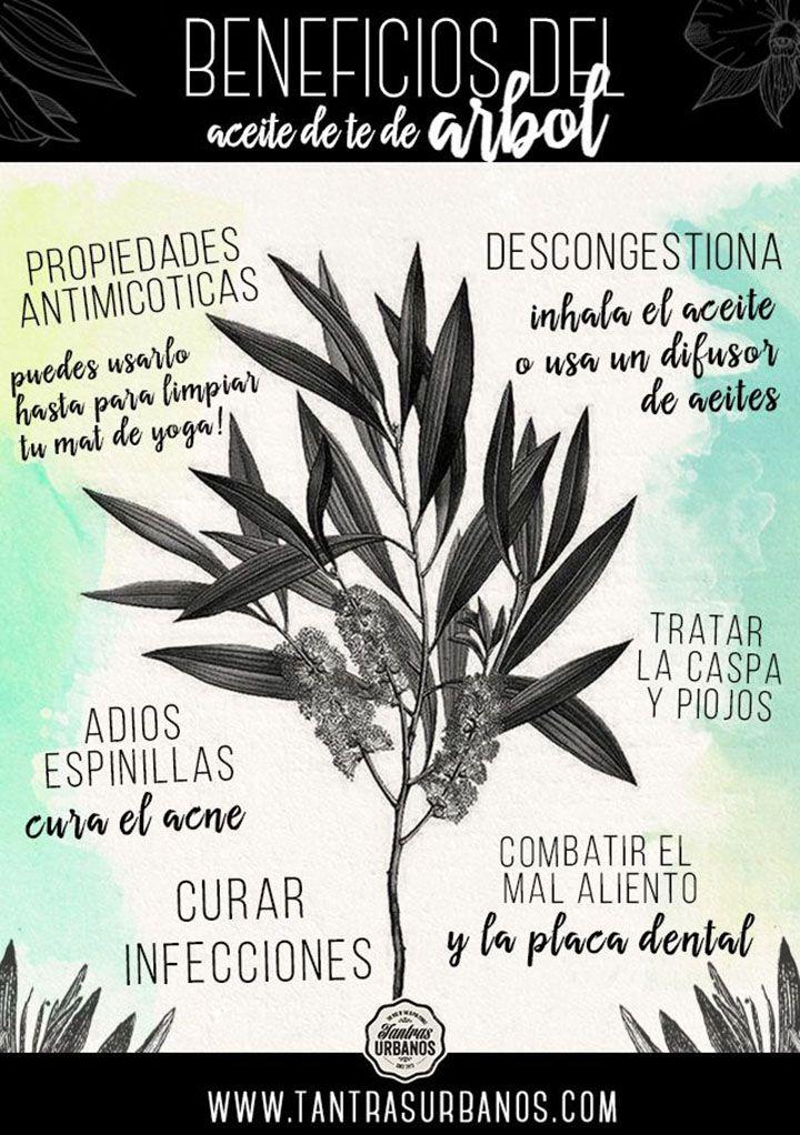 Los beneficios del aceite de árbol de té. #infografia #herbolario #plantas