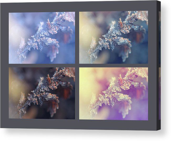 Jenny Rainbow Fine Art Photography Acrylic Print featuring the photograph Four. Frozen Leaf. Natural Wonder by Jenny Rainbow