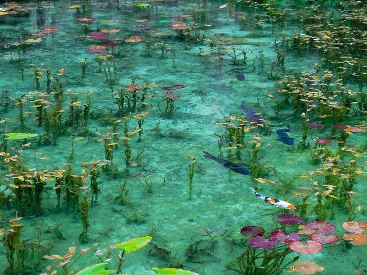 Macの壁紙として使用され、「日本にはこんな美しい池があったのか」と話題になった北海道の青い池。そんな青い池の他にも、日本全国いは神秘的で美しい池が数多く存在することをご存知ですか?今回は、死ぬまでに一度はみておきたい絶景池を、厳選して5カ所ご紹介します。
