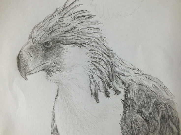 My drawing of a Philippine Eagle | My Artworks | Pinterest ...