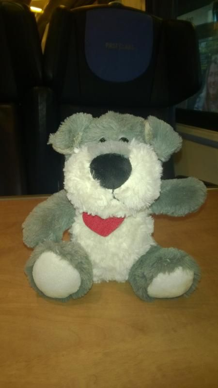 Found on 20/06/2015 @ On Train between Sheffield and Derby. The teddy has been handed in at Lost Property at Derby Visit: https://whiteboomerang.com/lostteddy/msg/mfqt9q (Posted by East Midlands Trains on 21/06/2015)