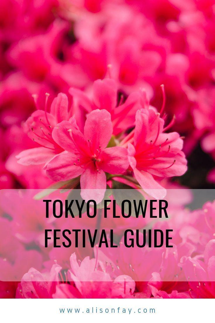 Tokyo S Bunkyo Azalea Flower Festival Worldwide Travel Japan