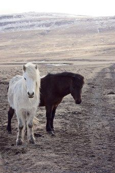 Laxnes Special Horse Riding Tour