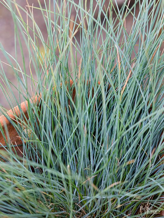 Best plants for rock gardens traditional colors and for Planting schemes with grasses