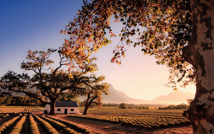 Franschhoek (South Africa). 'Franschhoek is the smallest but for many the prettiest Cape Winelands  town. Nestled in a spectacular valley,  Franschhoek bills itself as the country's gastronomic capital, and you won't find too many people arguing.' http://www.lonelyplanet.com/south-africa