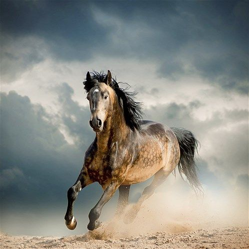 Wild Horse Running Fast 502 Best images about ...