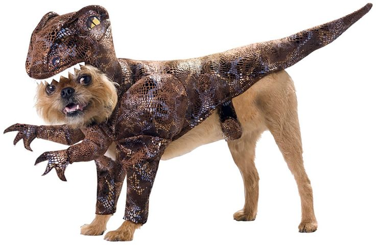 Raptor Dog Costume -  Dog Halloween Costumes from EntirelyPets