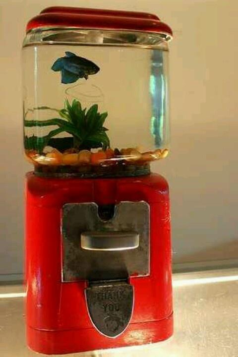Un détournement d'objet pour un betta. http://www.goldfish.fr