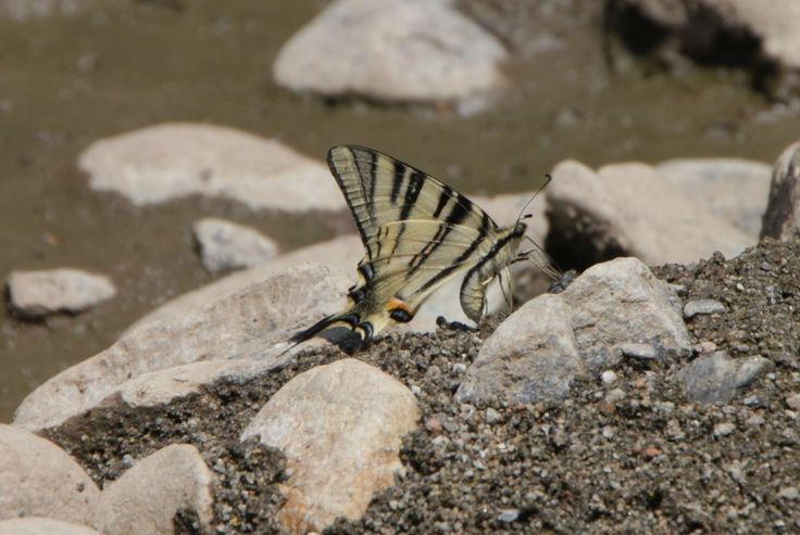 Butterflies Drinking Water in the Riverside Sand, Hot Summer - Public Domain Photos, Free Images for Commercial Use