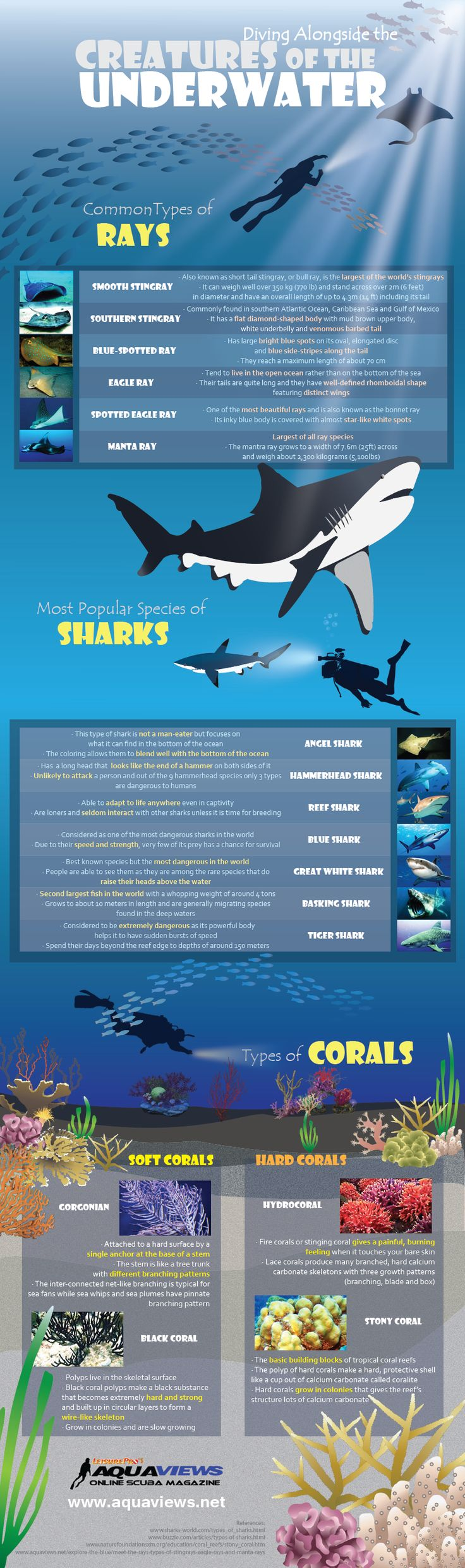 Take a look at a fun and engaging infographic highlighting popular types of rays, sharks and corals based on reader popularity.
