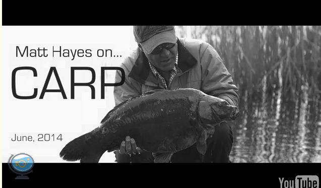 Matt Hayes carp fishing - The UK's favourite angler catches carp from Bluebell Lakes. See him land numerous 20lb-plus fish, and explain how he feels about modern-day carp fishing tactics and techniques!... View the video at http://carpfishinglakes.com/videogallery/matt-hayes-carp-fishing/