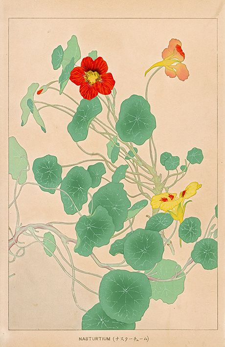Chigusa Soun Flowers of Japan Woodblock Prints 1900