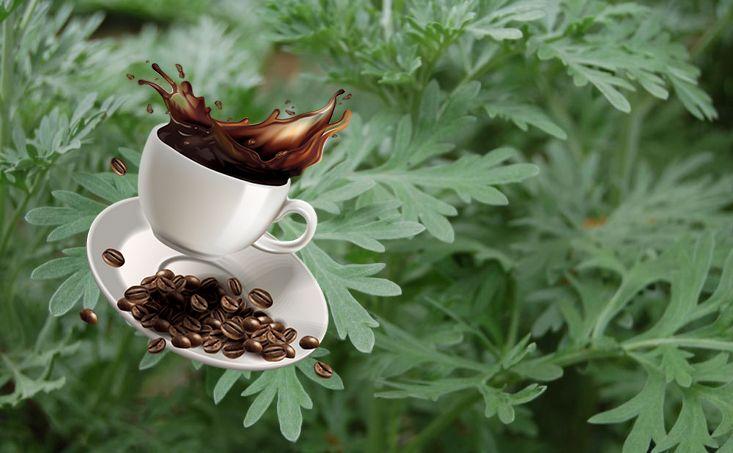 باحثون ألمان يكشفون نجاعة الشيح مع القهوة ضد كورونا Glassware Tableware