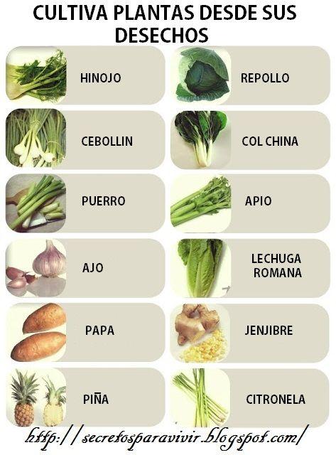 Puedes replantar la base de la lechuga, del apio y otros vegetales para hacer crecer un nuevo vegetal. Coloca la base en un p...