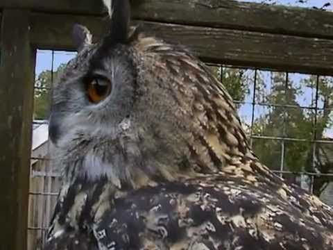National+Geographic+Wildlife | National Geographic Wildlife Wonders, Owls - The Silent Hunters ...