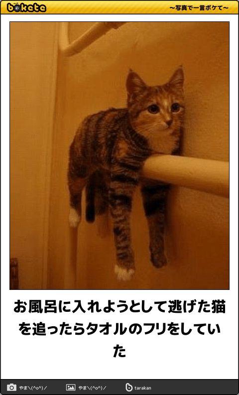 お風呂に入れようとして逃げた猫を追ったらタオルのフリをしていた