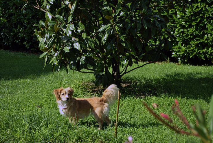 mila  in giardino