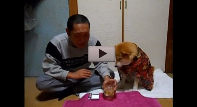 Un chien pour les alcooliques anonymes