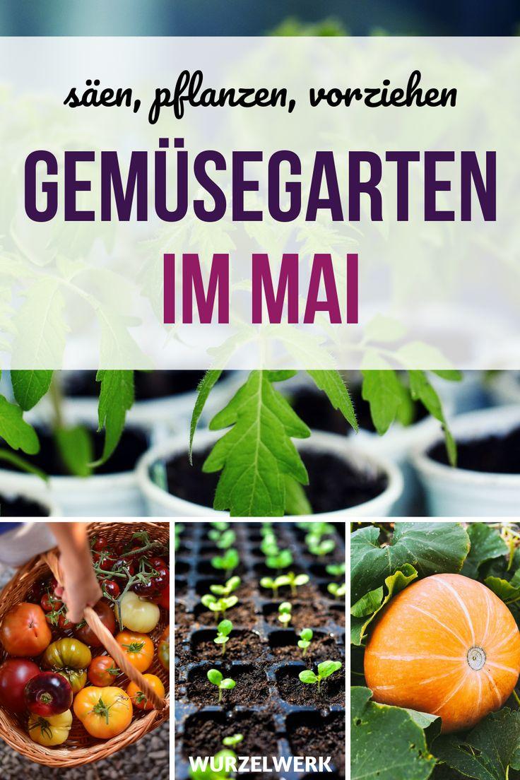 Aussaat & Pflanzen im Mai + Pflanzplan zum Ausdrucken