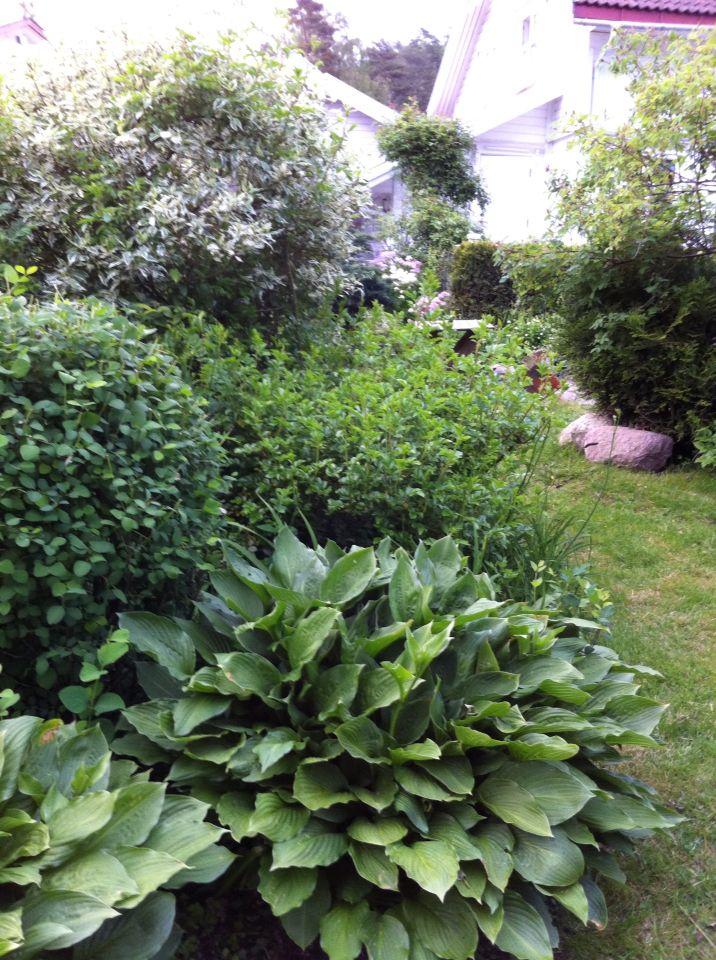 Elsker det grønne. Min hage.