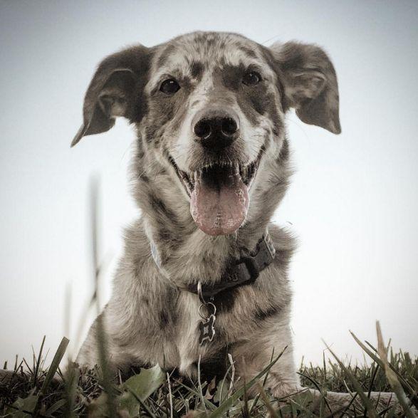 Cutie pie at Liberty Dog Park - Liberty, MO - Angus Off-Leash #dogs #puppies #cutedogs #dogparks #liberty #missouri #angusoffleash