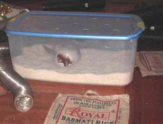 Dig box for ferrets. Filled with rice, beans, or ping pong balls.