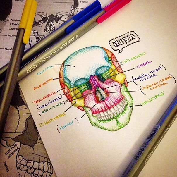 """Sarah Clifford is """"a medical student and a biology tutor with a passion for creating illustrated ..."""