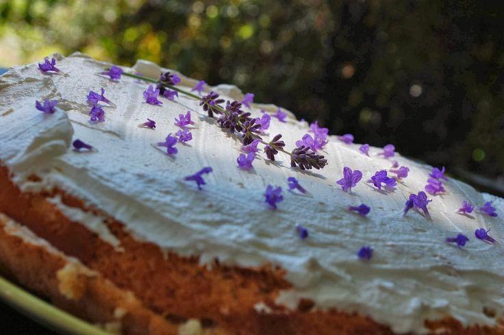 Daring bakers challenge září: Pastel de tres leches - 3Milk cake - Trojmléčný koláč | Ze zahrady do kuchyně