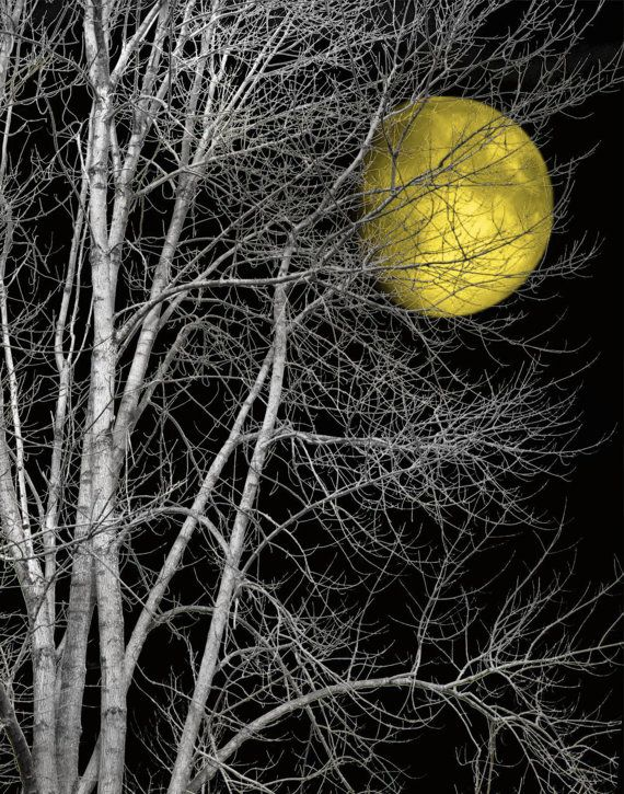 Black and white yellow moon tree wall art by littlepiephotoart 19 99