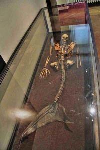A mermaid skeleton in the Danish National Museum
