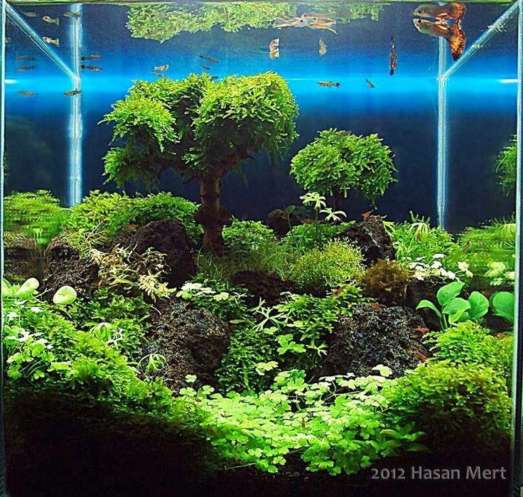 Aquascape Tree: 1000+ Images About Aquarium On Pinterest