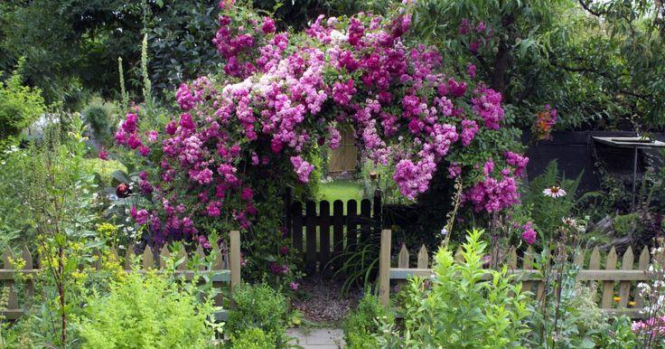 Ob sonnig, halbschattig oder schattig – für jeden Standort im Garten gibt's die richtigen Kletterpflanzen.