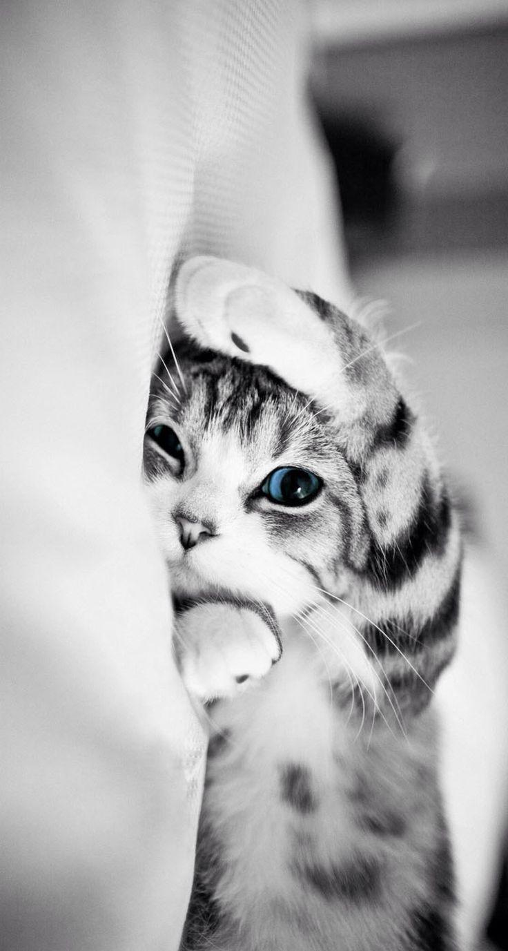 best 25+ cute cat wallpaper ideas on pinterest | cute cat drawing