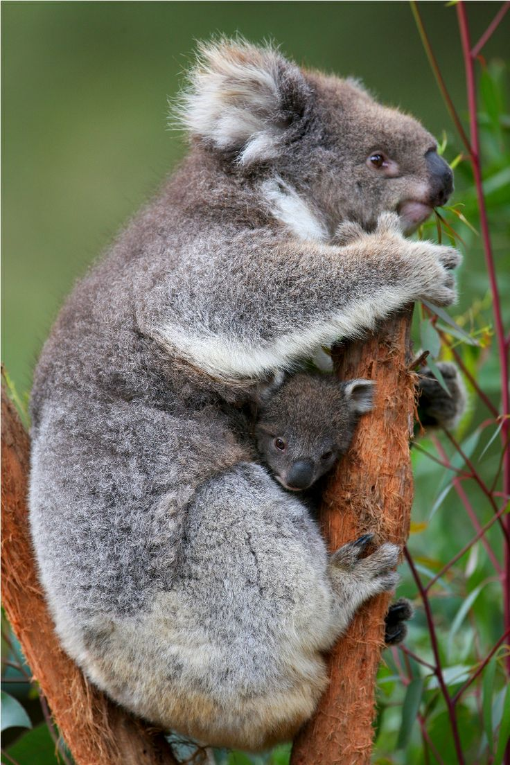 Wishing everyone a happy Mother's Day this weekend from Healesville Sanctuary.