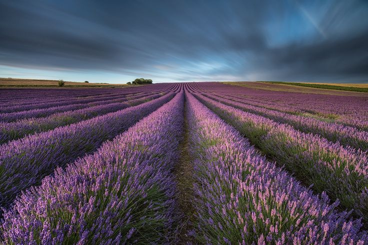 lavender fields forever by Mirek Galagus on 500px