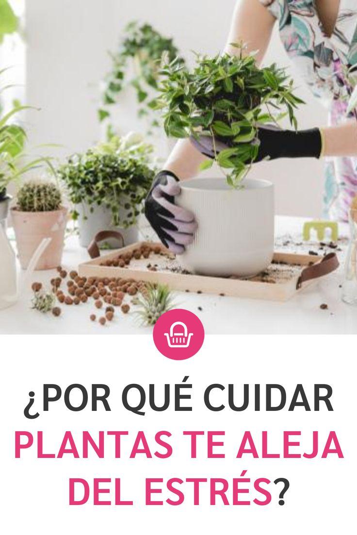 Cuida plantas y libérate del estrés. Nature, Ideas, Pink, Health And Wellness, Magick, Plants, Naturaleza, Nature Illustration, Thoughts