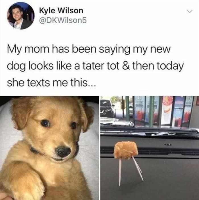 21 Hunde Memes Um Sie Daran Zu Erinnern Wie Derpy Diese Grossen Schwimmer Sind Lustige Hund Meme Lustige Tiere Lustige Tiermemes