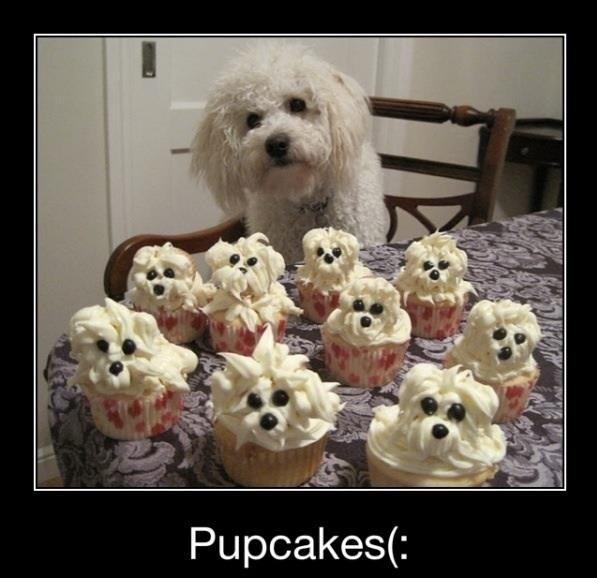Birthday Cake Dog Meme ~ Cute memes pupcakes for a dog birthday party holidays pinterest and pup