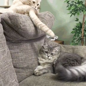 "Each silently thinking: 1st cat: ""I command you to massage my tail, stupid"".  2nd cat: ""Drop that tail and it gets a pummeling, idiot""!  However, out loud, both say: hey hey sup!"