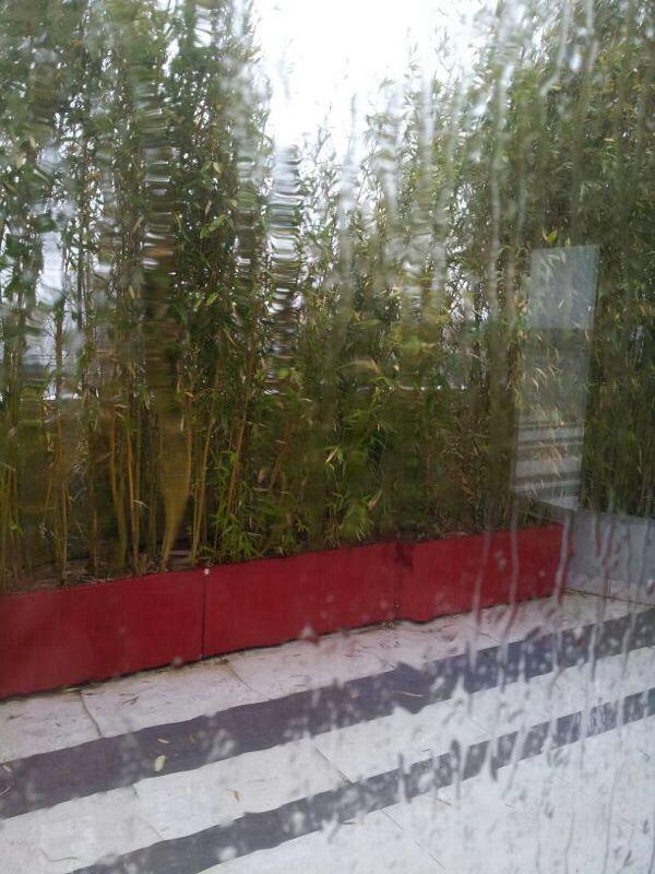 Al-So terrace rain