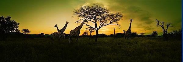 Afrique du Sud – Circuit 12 jours / 9 nuits - Photo © South African Tourism