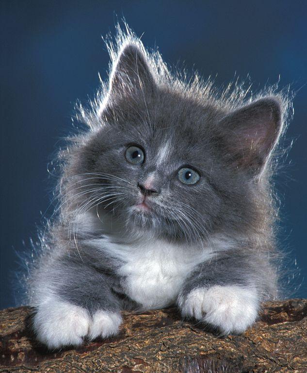 kitten pooping everywhere