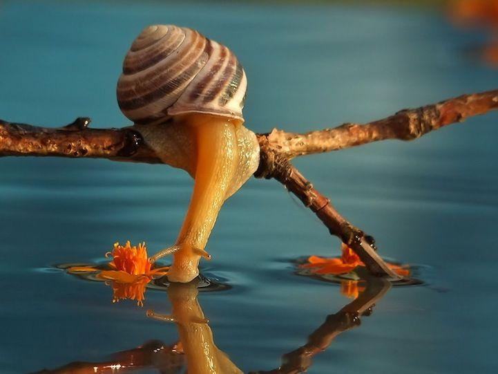 Macro fotografias revelam a vida íntima dos caracóis!