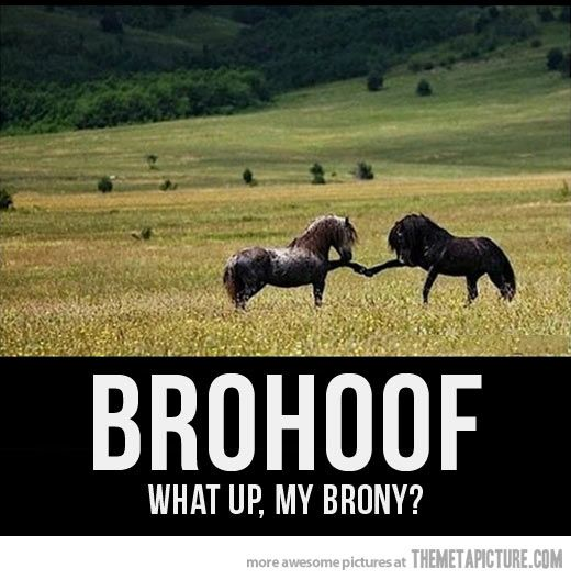 Brohoof…