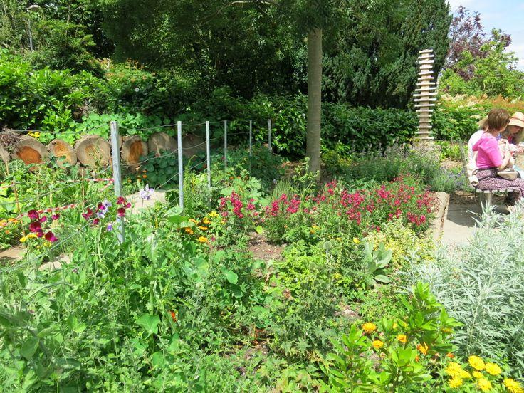 Leamington Spa, The Jephson Gardens, Planting veg amongst the flowers in the new Sensory Garden.