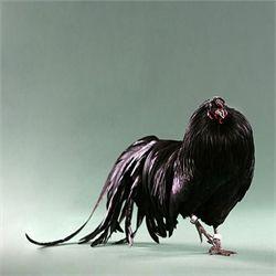 Black Sumatra...hmmmm