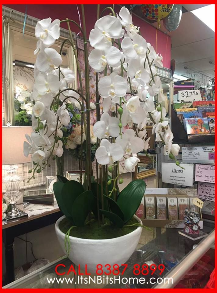 Amazingly beautiful Singapore orchid in pots 102cm tall For more details, CALL +61 8 8387 8899 #itsnbitshome #adelaideloves