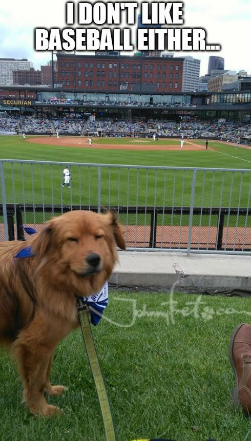 https://es.johnnybet.com/pronostico-tour-de-francia-2017#picture?id=10124 #baseball #dog #sportmemes #funnypics #followus